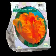 Tulipa (Tulip) Orange Favourite, Parrot,12 bulbs.