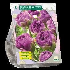 Tulipa (Double Tulip) Blue Wow, 5 bulbs.