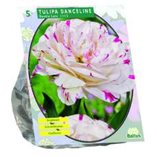 Tulipa Danceline per 5. NEW!