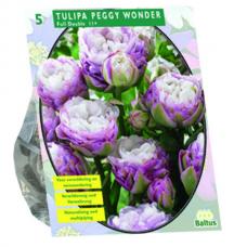 Tulipa Peggy Wonder per 5. NEW!