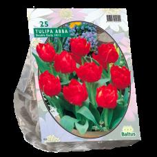 Tulipa (Double Tulip, early Abba, 20 bulbs.