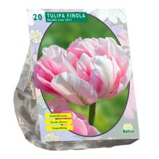 Tulipa Dubbel Late Finola per 20. NEW!