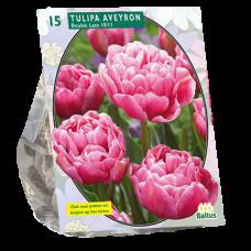 Tulipa Double Late Aveyron per 15