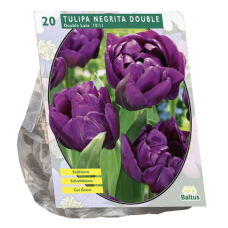 Tulipa Double Late Double Negrita, 20 psc