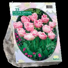 Tulipa (Double Tulip, late) Upstar, 25 bulbs.