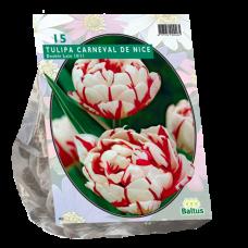 Tulipa (Double Tulip, late) Carnaval de Nice, 15 bulbs.