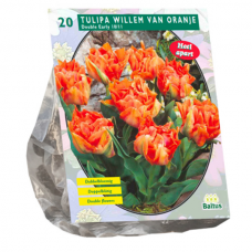Tulipa Double Early William of Orange per 20