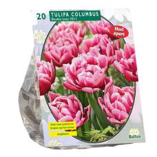 Tulipa Double Late Columbus, 25 psc