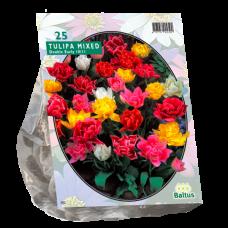 Tulipa  (Double Tulip early) Mix, 25 bulbs.