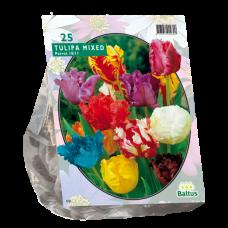 Tulip (Tulipa) Parrot Mix, 25 bulbs.
