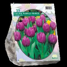Tulipa (Tulip) Purple Prince, Triumph, 25 bulbs.