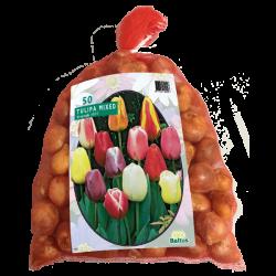 Tulipa (Tulip) Darwin Mix, 50 bulbs.