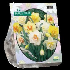 Narcis Dubbel Mix, 12 bulbs.