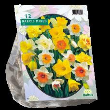 Narcis Trompet, Mix, 12 bulbs.