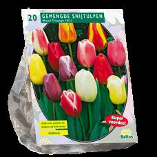 Tulipa (Tulip) Darwin Mix, 20 bulbs.
