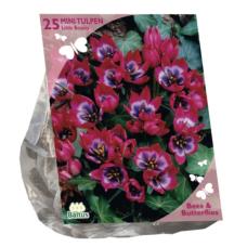 Tulipa Little Beauty per 25 (Bees & Butterflies) SOLD OUT!