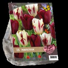 "Urban Flowers - Perfection ""City Flowers"", 15 bulbs."