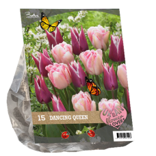 "Urban Flowers - Dancing Queen, ""City Flowers"",15 bulbs."