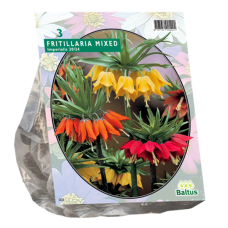 Fritillaria Imperialis (Crown Imperial), Mixed, 3 psc.