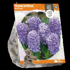 Hyacinth (Hyacinthus) Blue Tango, 3 pcs.