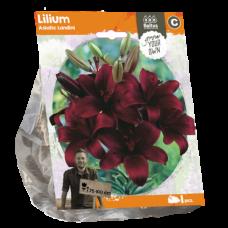 Lilium Asiatic (Lily) Landini, 1 psc.