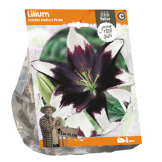 Lilium Asiatic (Lily) Netty's Pride, 1 psc.