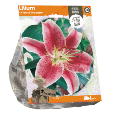 Lilium Oriental (Lily)  Stargazer, 1 psc.