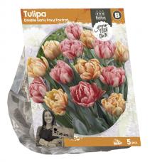 Tulipa Double Early Foxy Foxtrot, 5 psc.