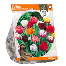 Tulipa Double Early Mix Club Beach, 5 bulbs.