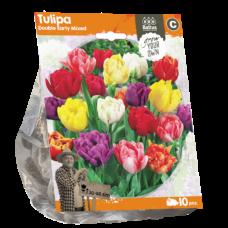 Tulipa Double Early Mixed,10 bulbs.