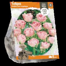 Tulipa (Double Tulip, late) Angelique, 5 bulbs.