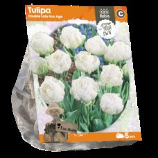Tulipa Double Late Ice Age (Sp) per 5