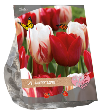 """Urban Flowers - Lucky Love, """"City Flowers"""",14 bulbs."""