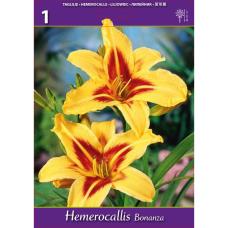 Hemerocallis Bonanza, Daylily (x1). SOLD OUT!