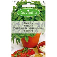 Greek Pot Basil (Ocimum basilicum)