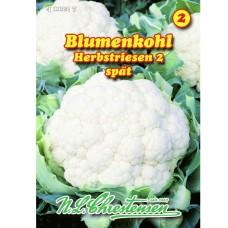 Cauliflower Herstriesen 2