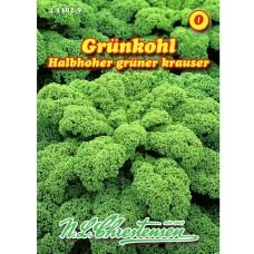 Kale 'Halbhoher grüner krauser' (Brassica oleracea)