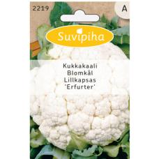 Cauliflower Erfurter