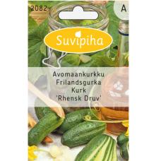Pickling сucumber 'Rhensk Druv'