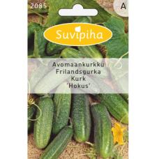 Pickling сucumber 'Hokus'