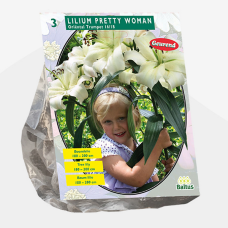 Lily (Lilium) Pretty Woman (Tree Lily) (x3) SOLD OUT!
