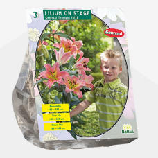 Lily (Lilium) 'On Stage' (Tree Lily) (x3. SOLD OUT!
