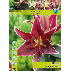 Lily (Lilium) 'Magny Cours' (x3) ORIENTAL LILY. SOLD OUT!