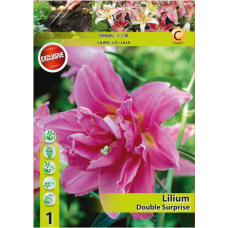 Lily (Lilium) 'Double Surprise' (x1) ORIENTAL LILY. SOLD OUT!