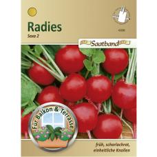 Radish 'Saxa 2', seed tape