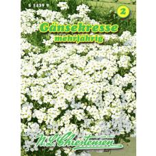 Arabis caucasica,Alpine rock-cress, white