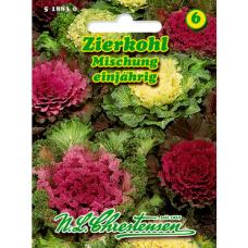 Brassica oleracea, Ornamental cabbage, mixture