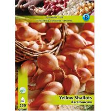 Shallots Yellow, Allium cepa Ascalonium (x250 Gram). SALE - 70%!