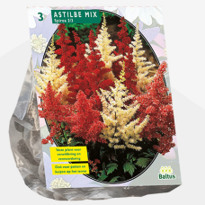 Astilbe, Mixed per 3. SOLD OUT!