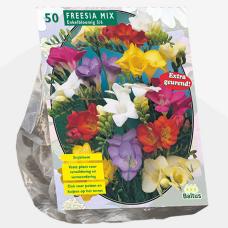 Freesia Single, Mix per 50. SALE - 60%!
